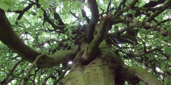 image of looking up through gnarled tree branches from beneath