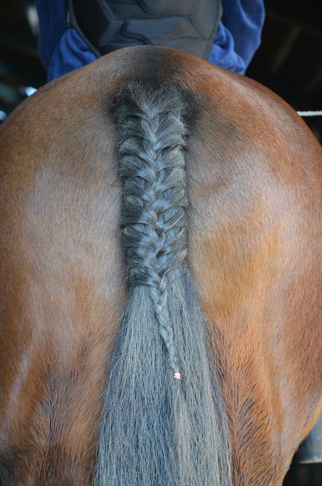 picture of a horse's behind and his tail