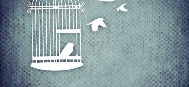 open bird cage with birds leaving