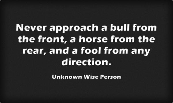 A Bull A Horse & A Fool